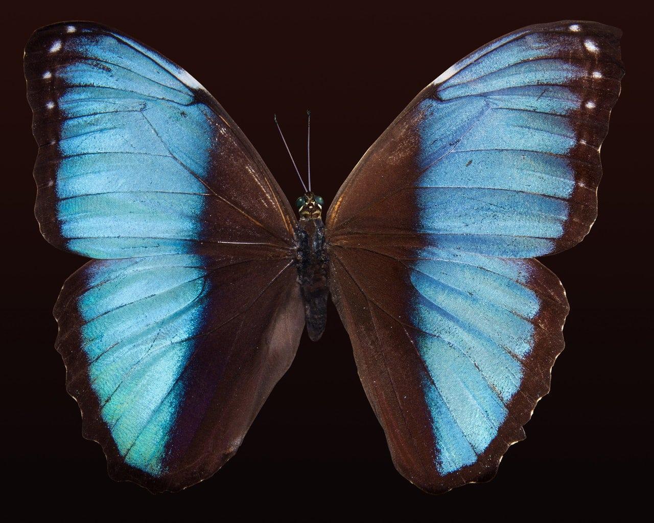 Schmetterling Tattoo Tattoo Idee